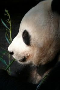 zoo-77817_640